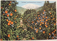 vintage orange groves